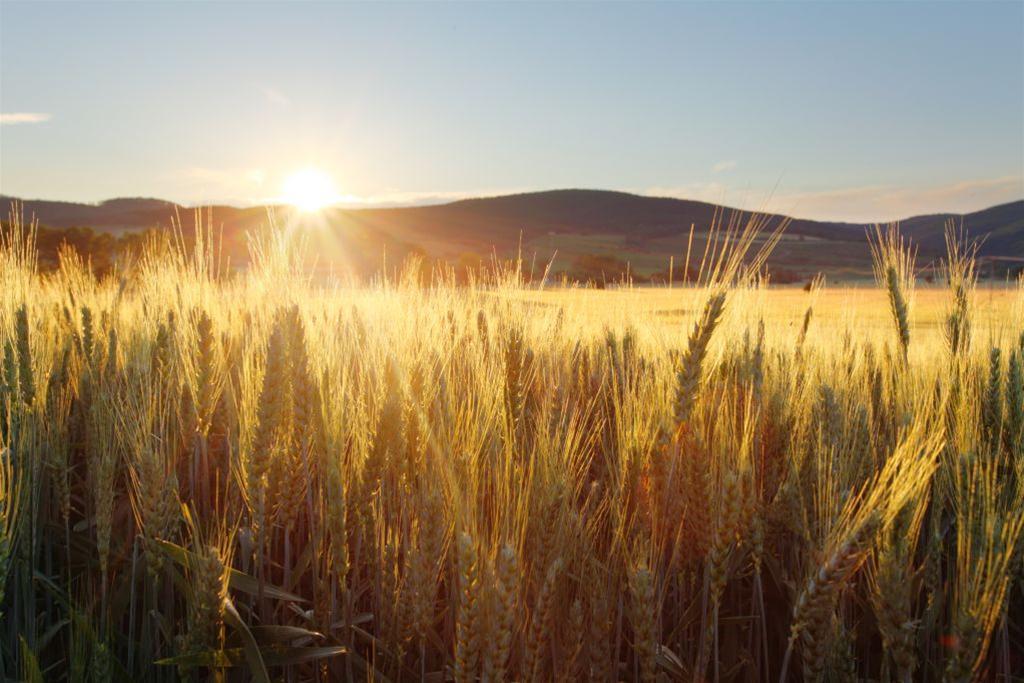 Wszyscy jemy GMO – czy jest się czego bać?